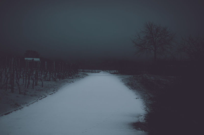 Into the darkness Vineyards  Dark Night darkness and light Winter Frosty Wintertime Snow Snowy Road Nature No People Landscape Cold Temperature Tree Direction Bare Tree The Way Forward Scenics - Nature Plant Tranquility Tranquil Scene Sky Environment Covering Beauty In Nature Diminishing Perspective Outdoors