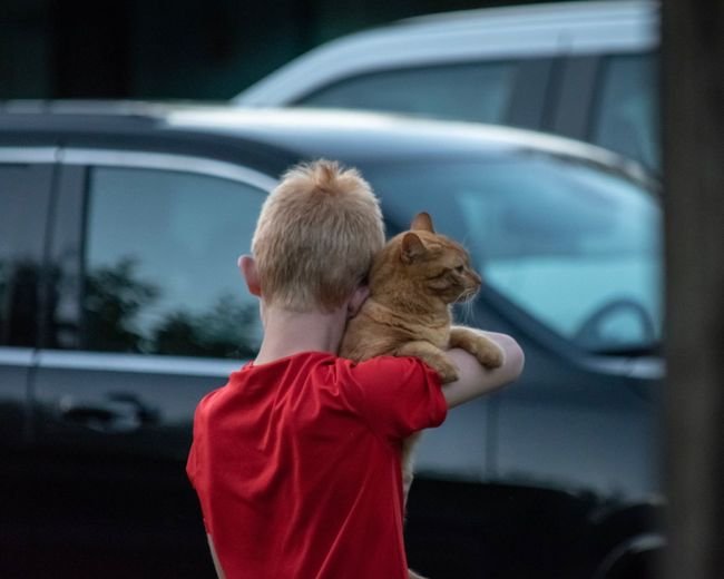 Rear View Of Boy With Cat Standing Against Cars