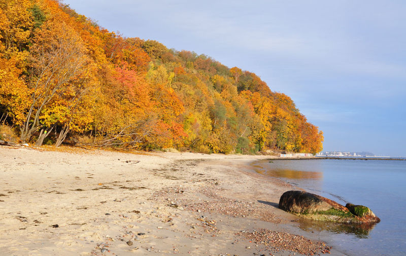 Autumn Trees At Beach