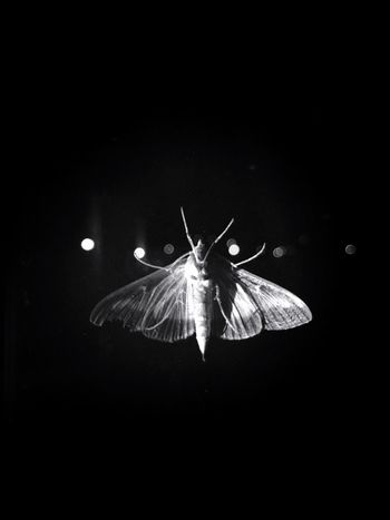 Nature Black Background Shades Of Grey Black And White Blackandwhite Black & White Monochrome Night Butterfly Life Is Beautiful Moments Light And Shadow Darkness And Light Light In The Darkness