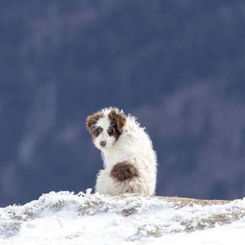 White dog on snow covered landscape