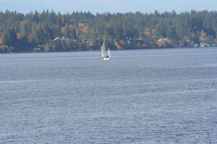 Autumn Autumn Colors Horizon Over Water Nature Nautical Vessel Outdoors Priest Point Park Puget Sound Sailboat Water Breathing Space