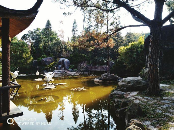 The Botanical Garden 厦门中国