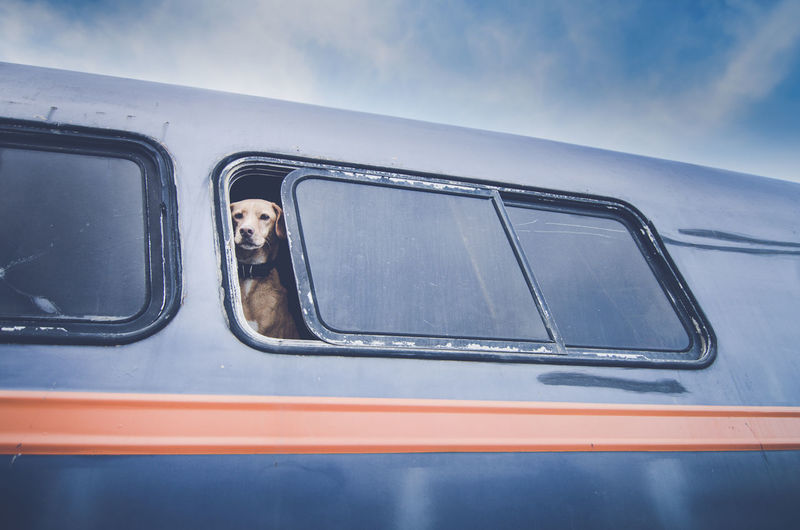 Dog Looking Through Bus Window Against Sky