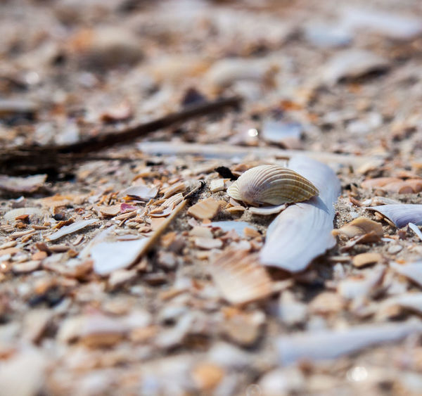 Animal Shell Animal Themes Animal Wildlife Animals In The Wild Close-up Day Fragility Gastropod Nature No People One Animal Outdoors Seashell Selective Focus Snail Fanø Danmark