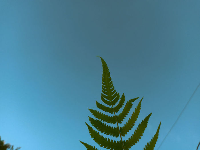 Low angle view of succulent plant against clear blue sky