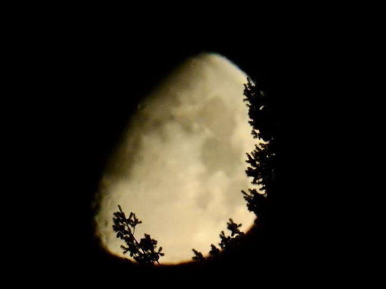 Shadows & Lights Angle Astronomy Close-up Focus On Shadow Moon Moon Surface Mysterious Nature Night No People Outdoors Scenics Shadow Sky Tree EyeEmNewHere EyeEmNewHere The Week On EyeEm