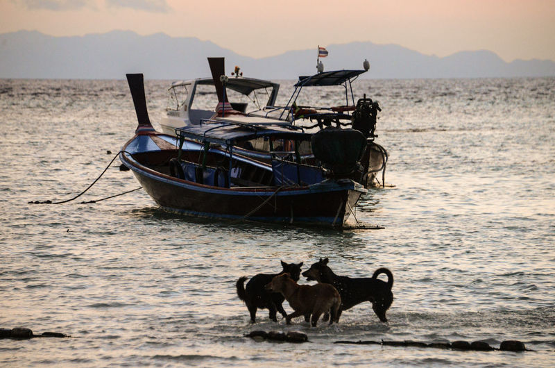 Playing Dogs Thailand Sunset Silhouettes Beachphotography Sunrise_Collection Water Sea Nautical Vessel Beach Fisherman Sand Fishing Horizon Over Water Fishing Boat Wave Seascape Low Tide Coast Tide