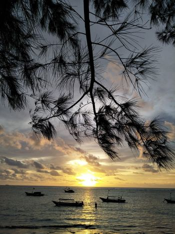 Sunset Sea Horizon Over Water Pine Trees Against The Sky Adventure Long Branch Leaf 🍂 Boats⛵️ Pine Trees Long Beach Island Water Over The Horizon Yellow Color Cano Lake Over The Objects And Subjects Horizon Outdoors Moments Of Life Bengkulu Indonesia Jet Boat Outrigger Transportation Silhouette Nautical Vessel Beauty In Nature Mode Of Transport Beach Cloud - Sky Tranquil Scene Scenics Tree