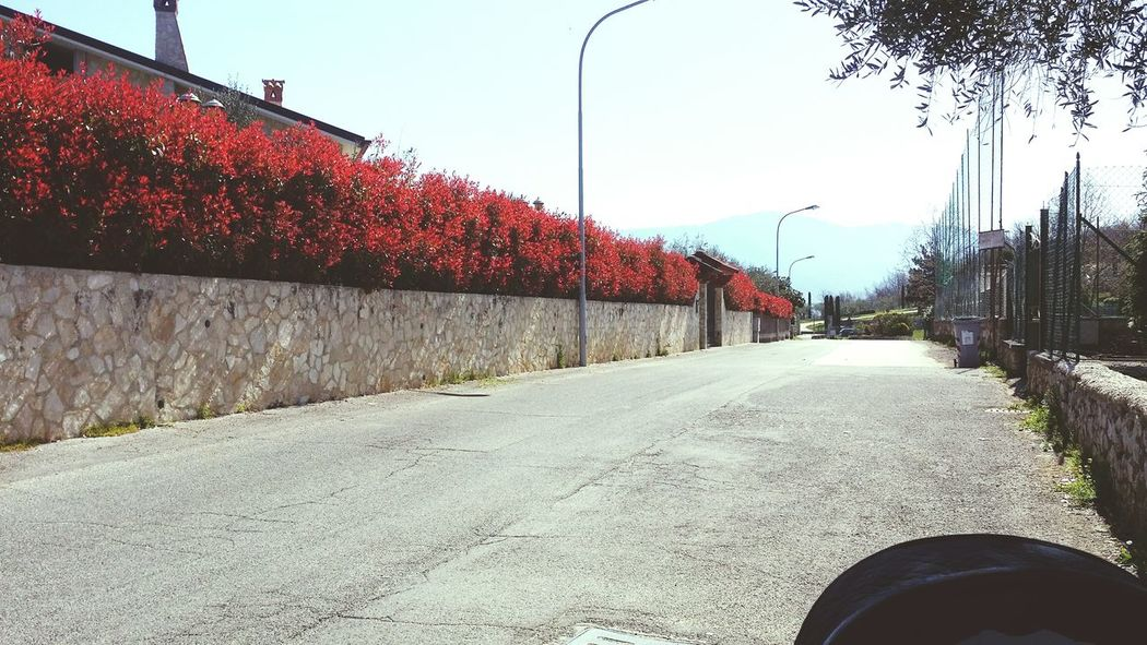 OpenEdit Red Tree Streetphotography LINE Design Urban Style Flowers Light Landscape
