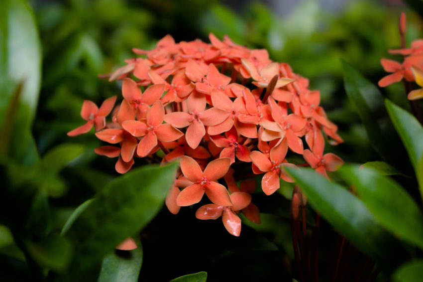 Beauty In Nature Close-up Flower Flower Head Growth Nature Plant Spike Flower