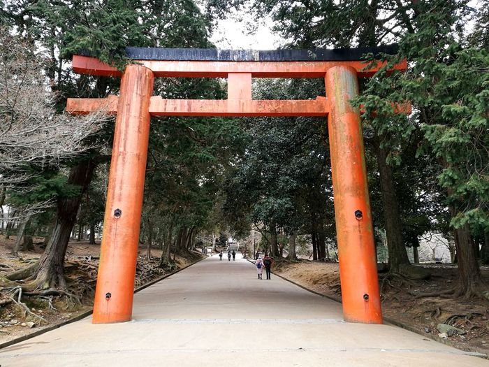 Japanese Style Japanese Traditional Arch Mystical Architectural Column Rituals & Cultural Mystical Place Japanese Temple Nature Forest Sanctuary  Shrine Temple Tree Orange Color Architecture Sky Historic Building Passageway Archway Arch Bridge Historic