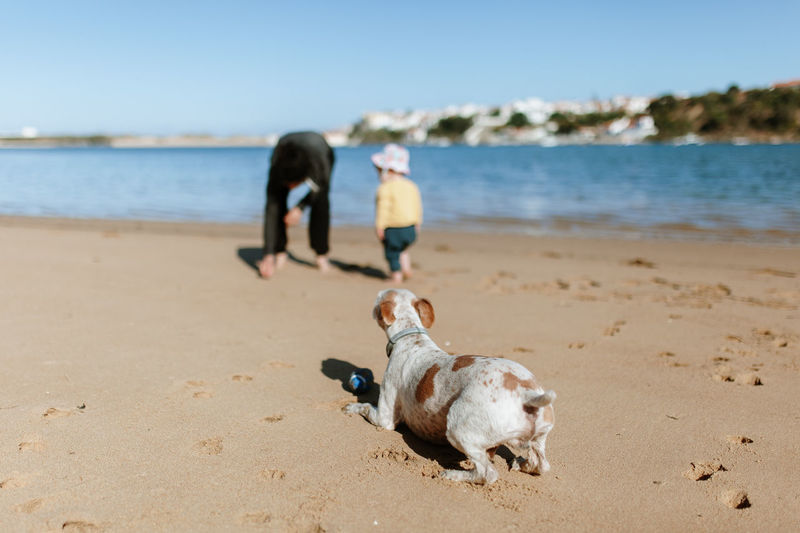 Close-up of dog with father and daughter at beach