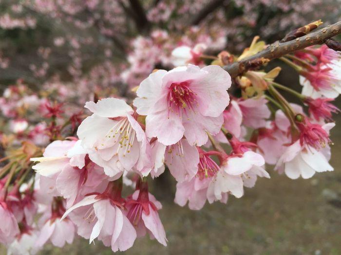 春だね~🌸