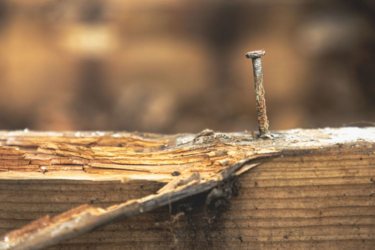 Stay strong. rusty nail on a rotten plank
