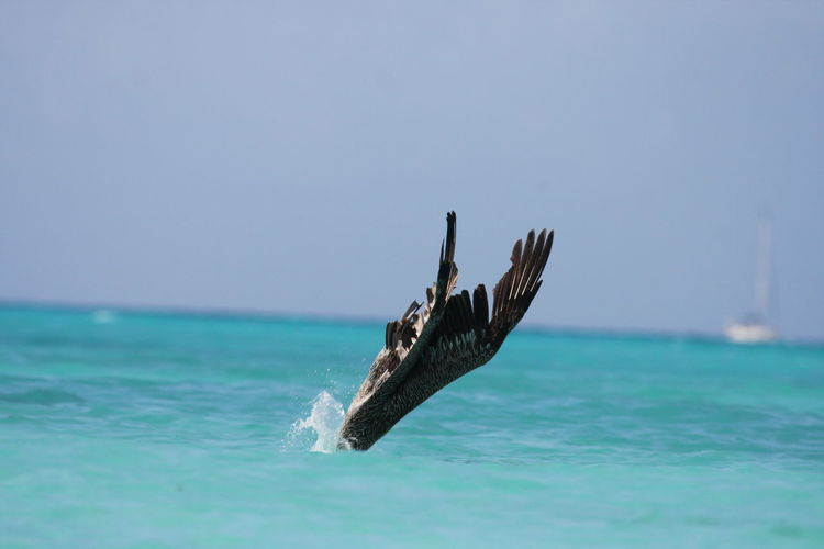 Pelican Diving Into Sea Against Sky