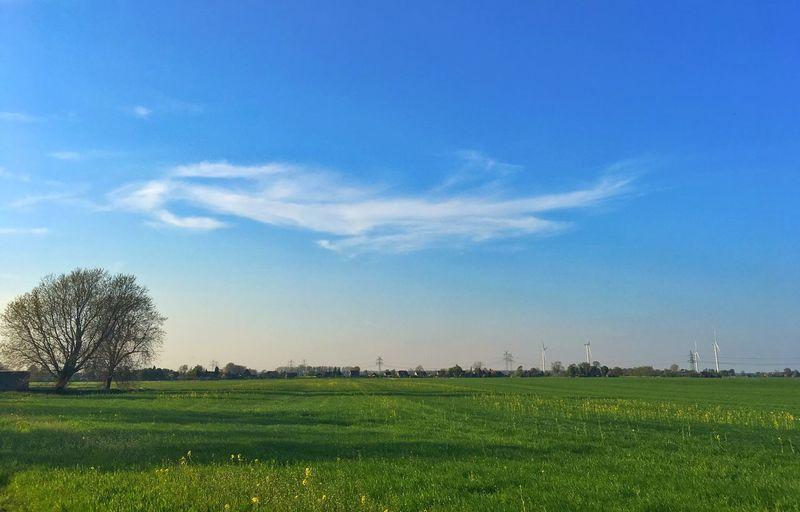 Sky Plant