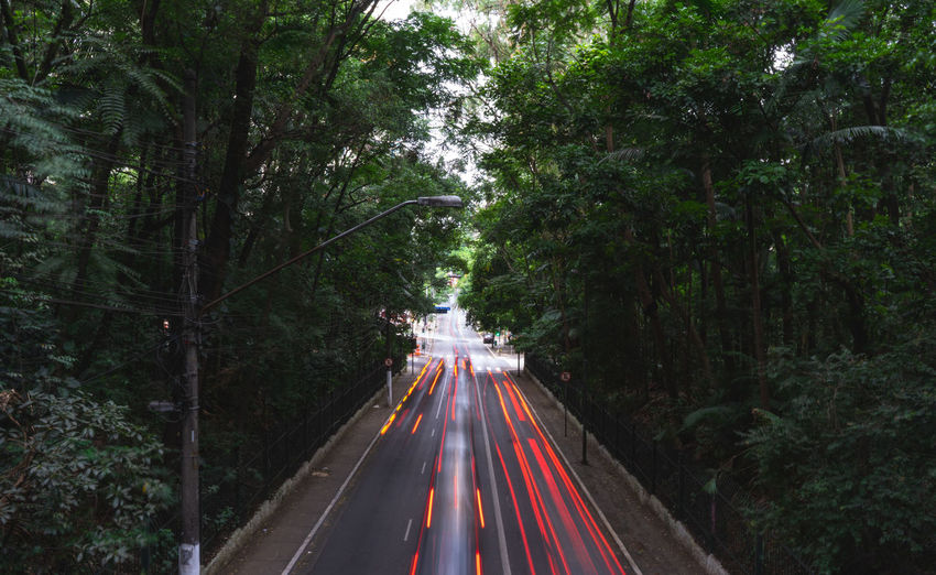 Light trails on road amidst trees in forest