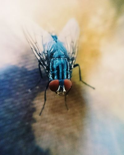 House fly First Eyeem Photo