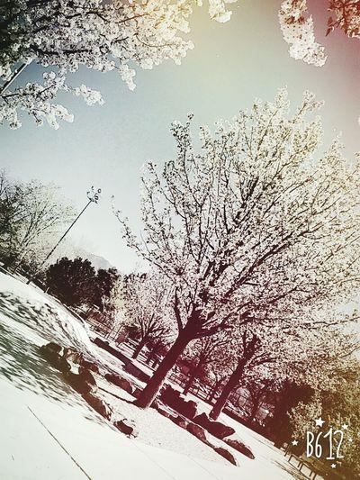 Los Altos park Albuquerque New Mexico Albuquerque Burque Los Altos Skatelifestyle Flowers Blooming Trees And Sky Beautiful Day