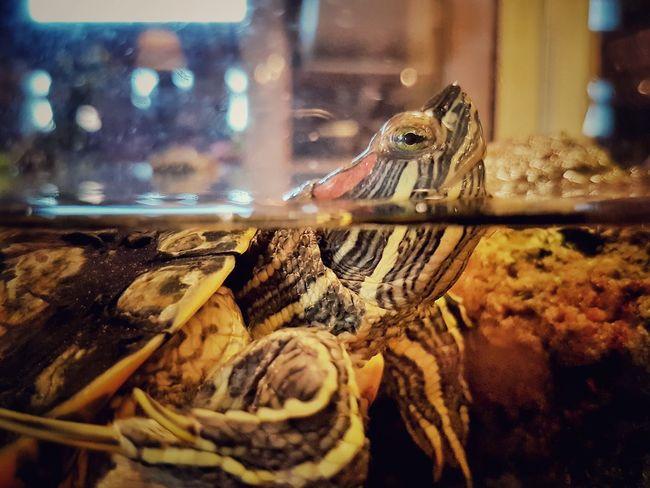 Угвэй Animal Themes Turtle 🐢 Oogway черепаха One Animal