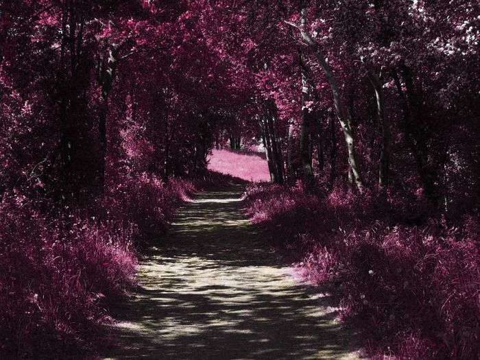 Street amidst pink flowering trees in forest