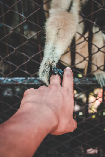 Don't go away. Monkey Nikond5300 Nikon Amity Animal Animal Body Part Animal Themes Docile Domestic Domestic Animals Domesticated Animal Finger Friendly Animals Friendship Hand Human Hand Mammal One Animal Pets Stray Vertebrate
