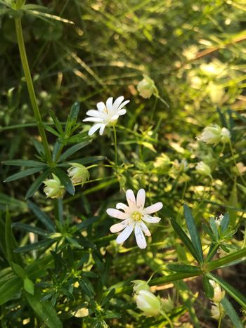 Flowering Plant Flower Plant Fragility Vulnerability  Growth Freshness Flower Head Nature Day Green Color Petal Focus On Foreground Beauty In Nature
