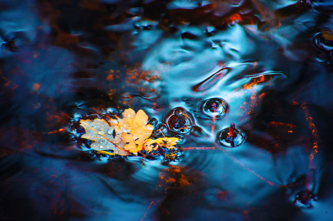 Flow of time Flowing Water Nature Backgrounds Beauty In Nature Close-up Day Drop Floating Floating On Water Flower Full Frame Lake Leaf Leaves Nature No People Outdoors Plant Plant Part Purity Reflection Time Water Wet