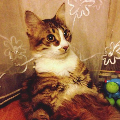 Cats Lol :) lol Pets