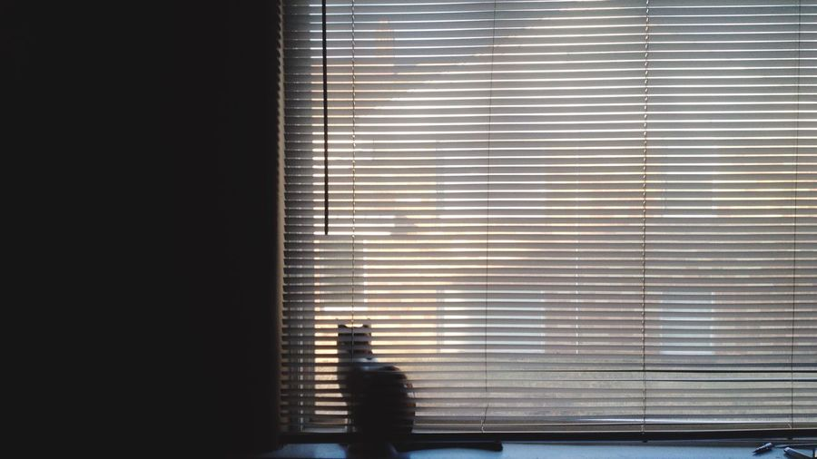 Photography Light Blinds Cat Kitty Kitten Sunny Sunny Day Goodmorning Kansas
