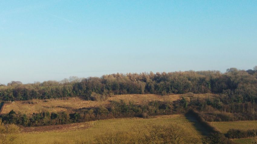 Clear Blue Sky Tranquil Scene Landscape Kent Border, UK Countryside No People Outdoors Clear Blue Sky Mid Winter Sunny Winter Day