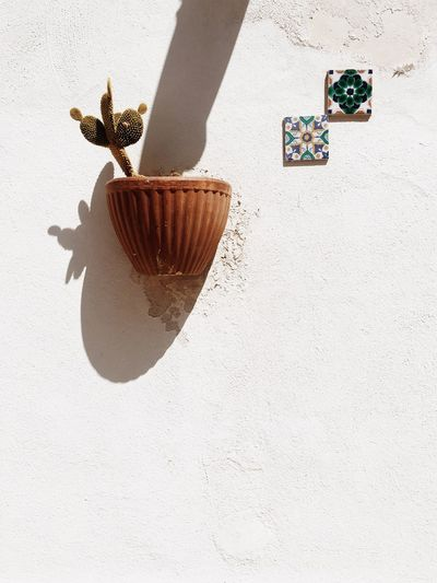 EyeEm Selects Shadow No People Day Indoors  Close-up Cactus Shadows & Lights Minimalism White Background Growth Sunlight Details Details Textures And Shapes Detailphotography Exterior Decoration Shapes And Forms First Eyeem Photo EyrEmNewHere EyeEmNewHere