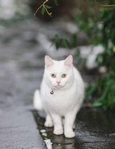 Portrait of cat on footpath