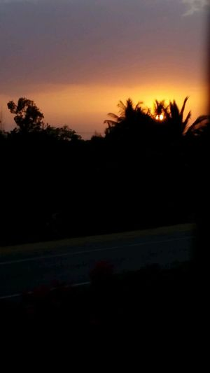 Sun peeps through the coconut tree saying a good bye to india and promising to light up western part of universe Sunlight Beauty In Nature Sunset Quick Capture Highway