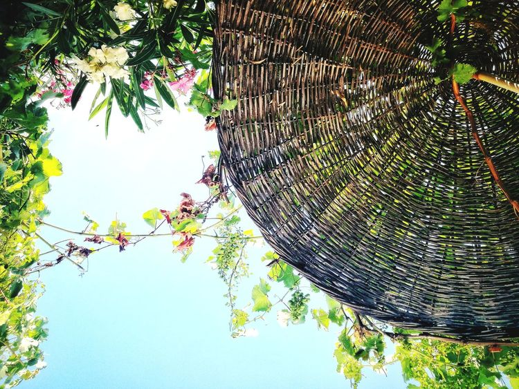 under the sun Tree Low Angle View Day Outdoors Nature Branch Growth Sky No People Hanging Beauty In Nature Plant Leaf Flower Close-up Smartphonephotography Secret Secret Places