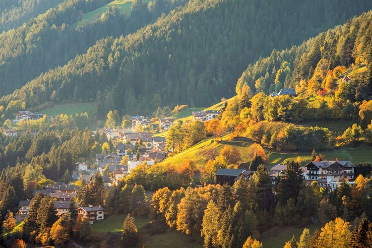 2017 281/365 Alto Adige Nova Levante October 8 Trentino Alto Adige Welschnofen Agriculture Architecture Autumn Beauty In Nature Building Exterior Built Structure Change Day Forest Growth High Angle View House Idyllic Italy Landscape Leaf Mountain Nature No People One Year Project Outdoors Rural Scene Scenics South Tyrol Tranquil Scene Tranquility Travel Destinations Tree Perspectives On Nature