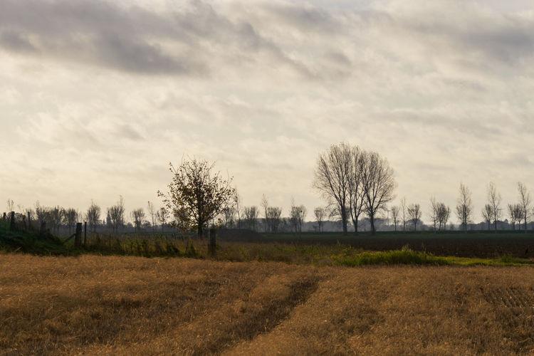 Olieslagersweg, Sluis EyeEm Market © Sky Landscape Tree Scenics - Nature Field Bare Tree Sony A77ii Zeeuws Vlaanderen Zeeland  The Netherlands Agriculture Cloud - Sky