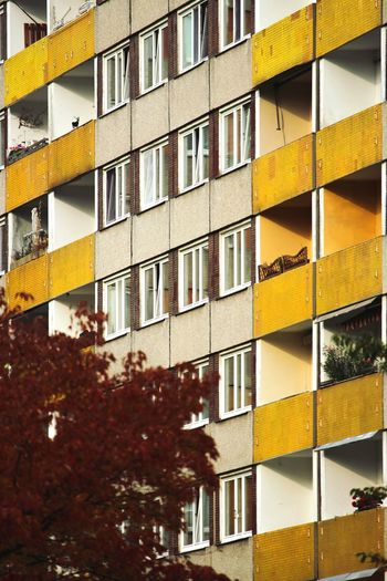 colours of autumn Architecture Built Structure Window Yellow City The Week On EyeEm Paint The Town Yellow Dresden / Germany Beauty In Nature Architecture Facades Facadelovers Facade Colours Facades And Light