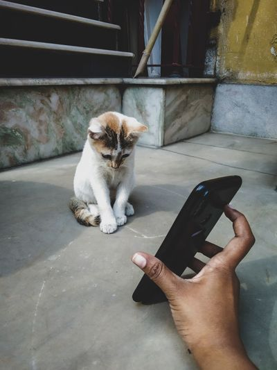 Cat sitting on hand