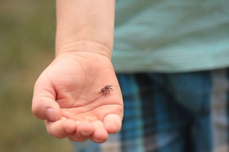 Close-up of a hand holding bug