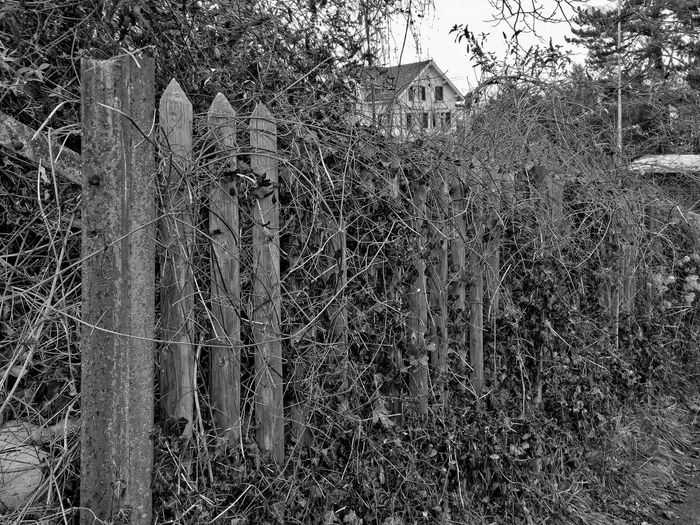 Bad Condition Bare Tree Black & White Blackandwhite Branch Danger Destruction Deterioration Dry Fence Grass HDR Hdr_Collection Metal Monochrome Nature Plants Ruined Season  Tree Trees Twig Winter The Great Outdoors With Adobe