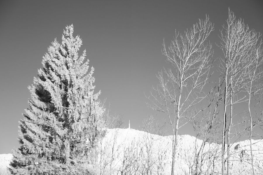 Infrared view on the Grünten mountain Allgäu Grünten Infrared Bare Tree Beauty In Nature Cold Temperature Day Field Infrared Photo Infrared Photography Infrarot Landscape Nature No People Outdoors Scenics Snow Snowflake Snowing Tranquility Tree Weather White Color Winter