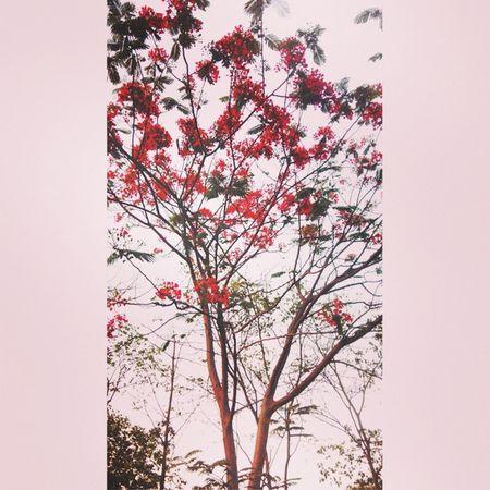 Nature Greenary Kesudo Ig_gujrat Colorfull_vibrant_gujarat