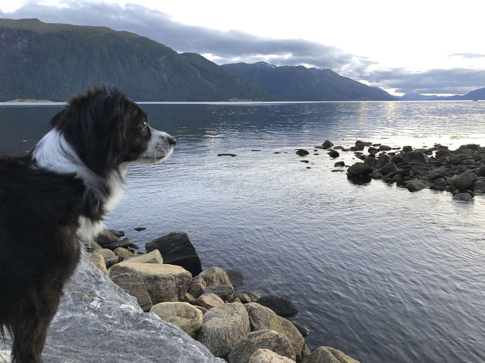 Dog on rock by sea against sky