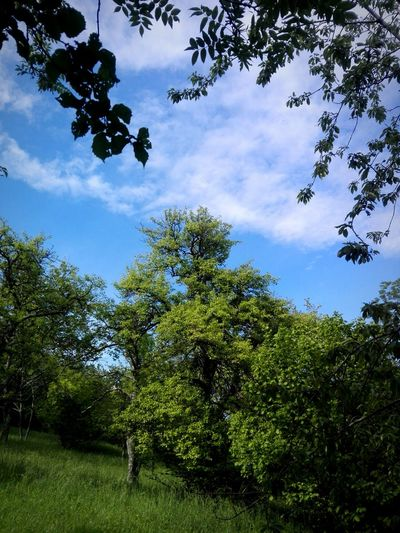 Tree Branch Forest Sky Green Color Cloud - Sky Glade Idyllic Tranquil Scene Calm