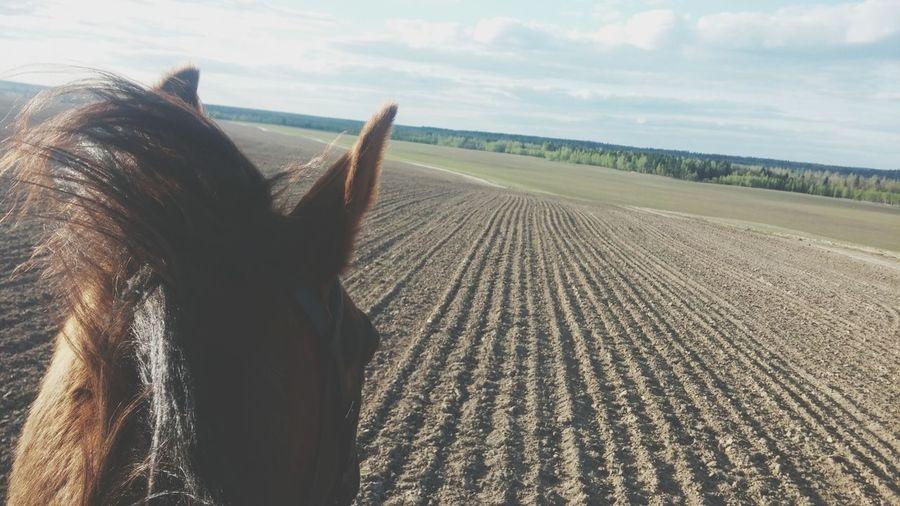 Enjoying Life Equestrian. <3 Horsetime Equestrian Equestrian Life Horseback Riding Nature Horseriding Horse Relaxing