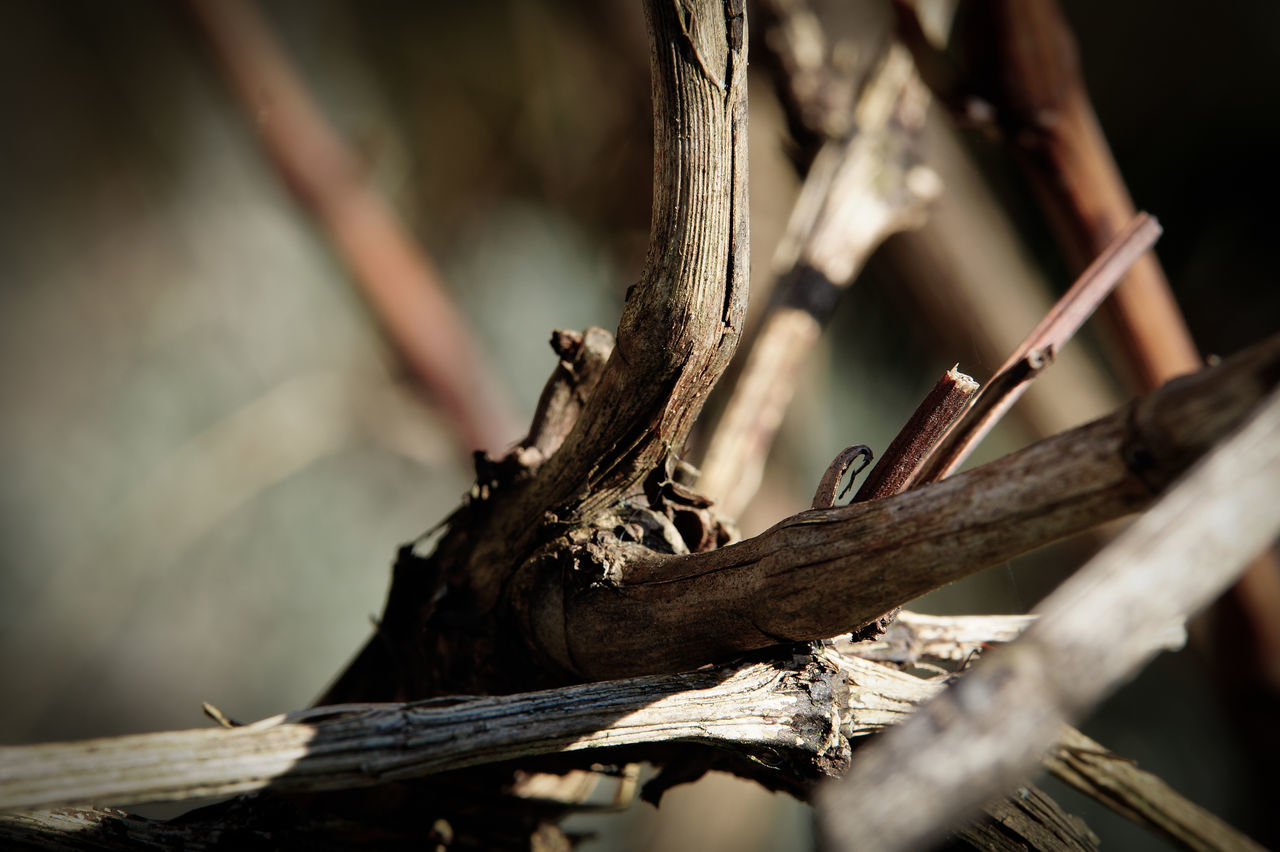 wood - material, close-up, tree, no people, focus on foreground, textured, day, tree trunk, outdoors, branch, nature
