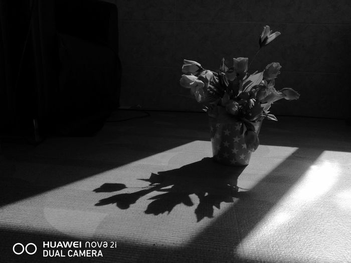 Flower Shadow No People Close-up Day first eyeem photo