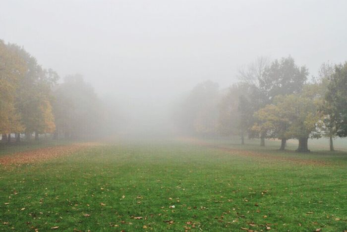 Landscapes With WhiteWall Foggy Morning Fog Eyeem Market EyeEm Gallery Tree_collection  Weather Landscape_Collection Light And Shadow Pattern, Texture, Shape And Form Outdoor Photography Frosty Mornings Cold Temperature Day Out Visiting Chilly Dew Nottingham Wollaton Hall Avenue Row Of Trees Row LINE Space